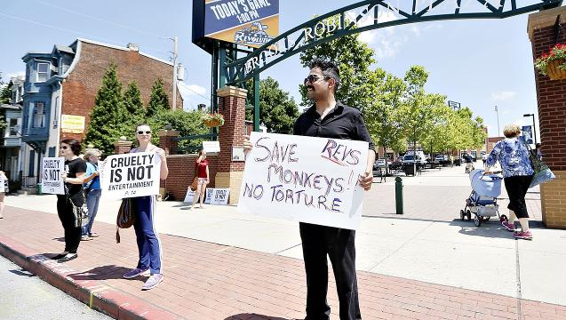 VIDEO: Monkey Rodeo Protest at Revs Game