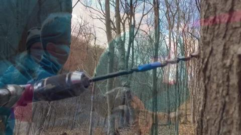 VIDEO: Maple Sugaring