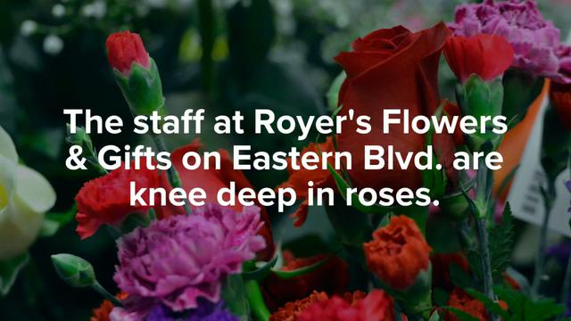 Staff at Royer's Flowers & Gifts on Eastern Blvd. are knee deep in roses as they prepare for Valentines Day.
